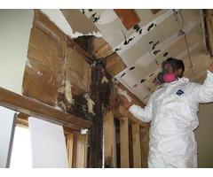 Mississauga Mold Removal Services