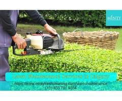 Best Lawn Maintenance Services