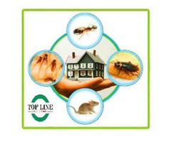 Pest Control Service In Langley   Top Line Pest Control