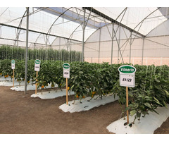 agricultural technician hydroponics ( farm manager)