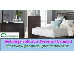 Bed Bugs Toronto