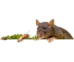 Looking for Mice Control Vaughan? - Pest R Gone
