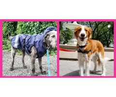Cityplace Dogs - Best Dog Walker Toronto - 7 Years of Experience