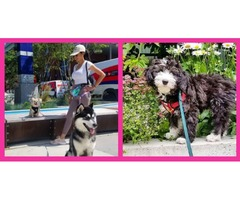 Cityplace Dogs - Platinum Dog Walking Packages
