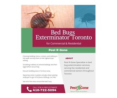 Bed Bugs Exterminator Toronto Services - Pest R Gone